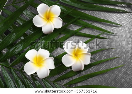 Beautiful composition of frangipani flower on palm leaves, close up - stock photo
