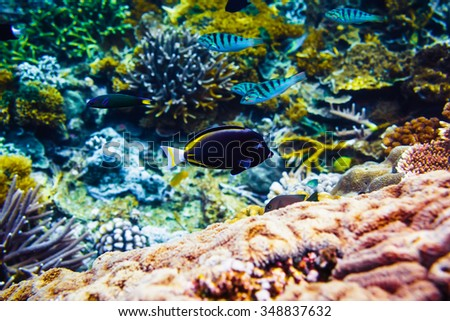 Beautiful coral and fish in the tropical sea