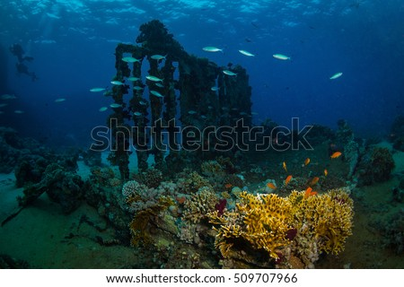 Beautiful coral garden in Red Sea