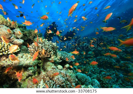 Beautiful Coral Reef and Colorful Fish and Scuba Divers - stock photo