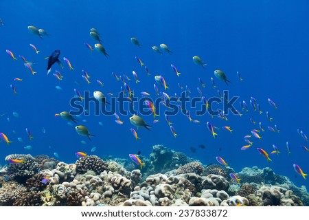 Beautiful coral reef fish underwater at Maldives - stock photo