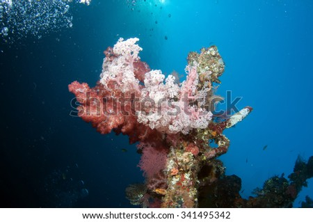 Beautiful coral reef grows on ship wreck. - stock photo