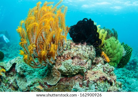 Beautiful coral reef in Anilao, Philippine. - stock photo