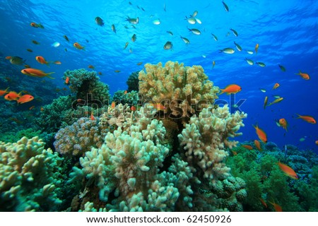 Beautiful Colorful Coral Reefs And Fish Tropical Seascape Soft...