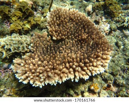 Beautiful Corals - stock photo