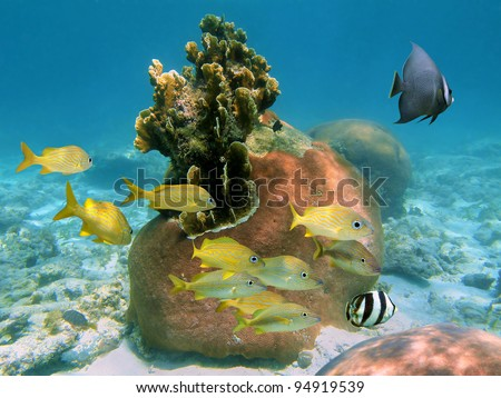 Beautiful corals with tropical fish in a reef of the Atlantic ocean, Bahamas - stock photo