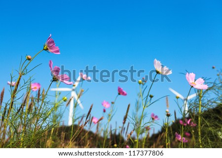 beautiful coreopsis flower on the front of wind turbines background - stock photo