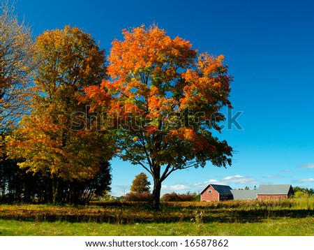 beautiful country scenary barn fall trees grass and blue sky - stock photo