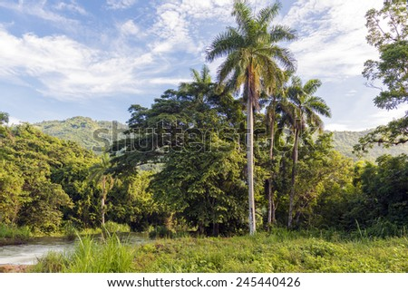 Beautiful countryside in a tropical country during summer time, exhuberant green vegetation and amazing blue clear sky - stock photo