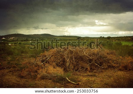 Beautiful countryside landscape with dry branches on the ground - stock photo