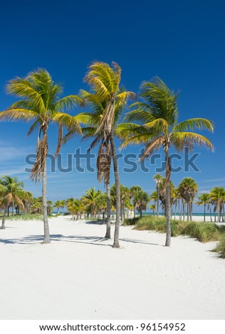Beautiful Crandon Park Beach in Key Biscayne in Miami. - stock photo