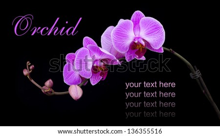 Beautiful curved pink orchid on dark background - stock photo