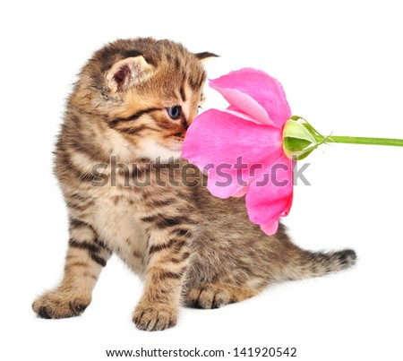 beautiful cute one month old kitten with a pink rose