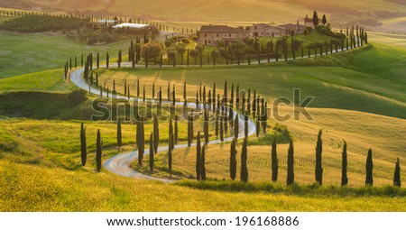 Beautiful cypress-lined road in the light of the setting sun - stock photo