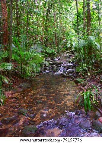 Beautiful Daintree Rainforest National Park in tropical Queensland, Australia