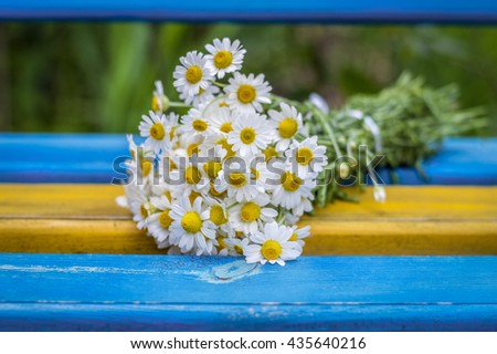 Beautiful Daisies on the bench outdoor, background - stock photo