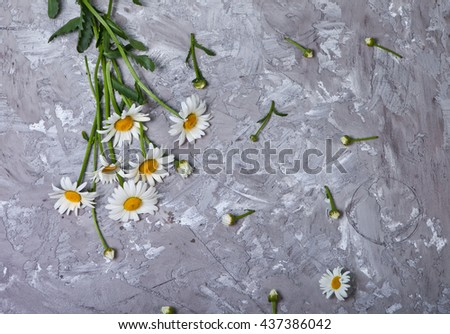 beautiful Daisy on gray concrete background. Summer card with chamomile  - stock photo