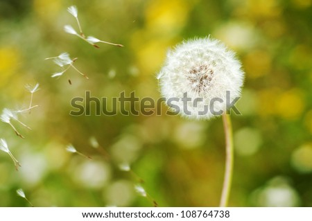 Beautiful Dandelion with seeds floating by wind and bokeh background wallpaper