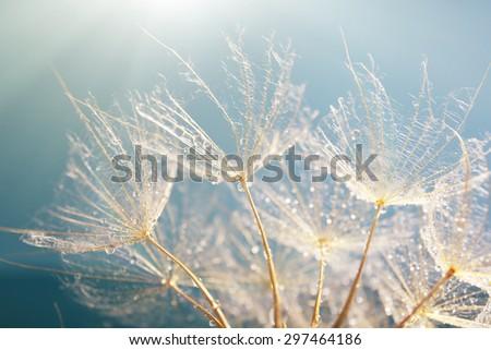 Beautiful dandelion with seeds, macro view - stock photo