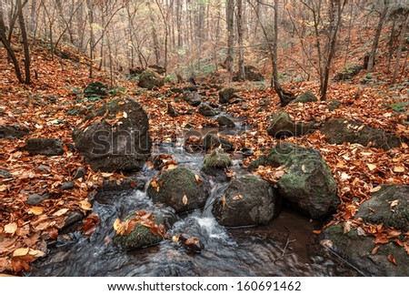Beautiful day in the misty autumn forest with creek - stock photo