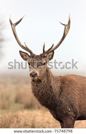 beautiful deer - stock photo