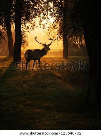 Beautiful deer in the forest with amazing lights at morning in October. - stock photo