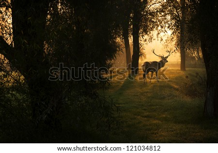 Beautiful deer in the forest with amazing lights at morning in October. View my gallery fore more beautiful nature photos. - stock photo