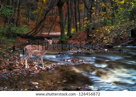 Beautiful deer in the forest with river - stock photo