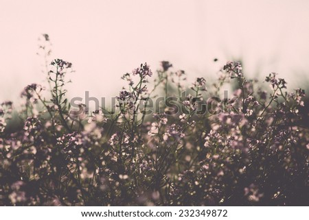 Beautiful defocus blur background with tender flowers. Floral art design in retro style. Vintage effect. - stock photo