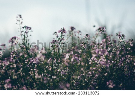 Beautiful defocus blur background with tender flowers. Floral art design in retro style. Vintage effect. Retro grainy color film look. - stock photo