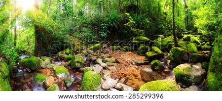 Beautiful 180 degree panorama of a stream in the rainforest jungle of the Masoala National Park in Madagascar - stock photo