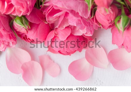 Beautiful, delicate, pink roses and rose petals on a light background, a beautiful background for cards, place for text