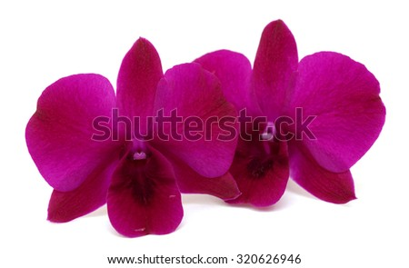 beautiful Dendrobium orchids flowers isolated on white background - stock photo