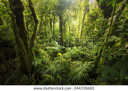 Beautiful, dense vegetation from the cloud-forests from Costa Rica. - stock photo