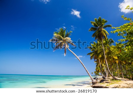 beautiful deserted palm lined caribbean beach - stock photo