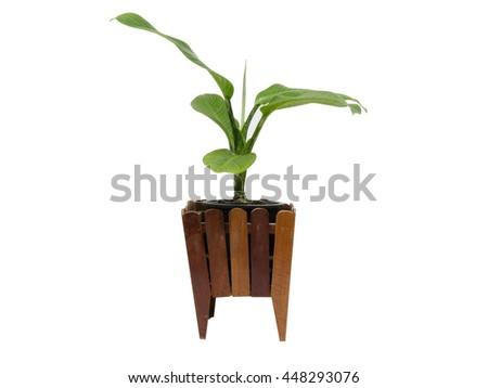 Beautiful Dieffenbachia in flowerpot, isolated - stock photo