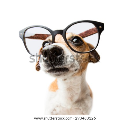 Beautiful dog with glasses portrait - isolated over a white background