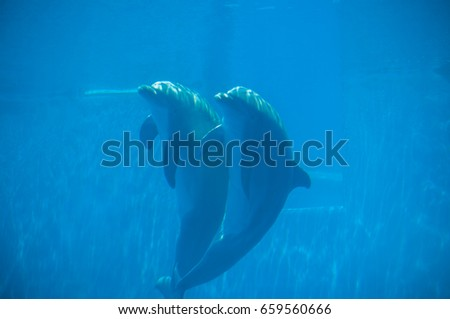 beautiful dolphin in the water