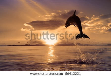 Beautiful dolphin jumping up from the ocean to the Sun at sunset time - stock photo
