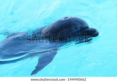 Beautiful dolphin swimming in the pool in sunny day.