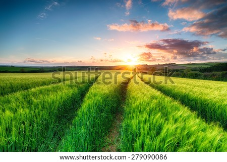 Beautiful dramatic sunset over fields of lush green barley in the countryside near Wadebridge in Cornwall - stock photo