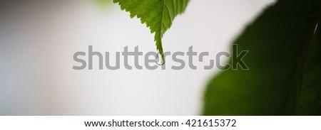 beautiful droplets on green leaf, macro shoot - stock photo