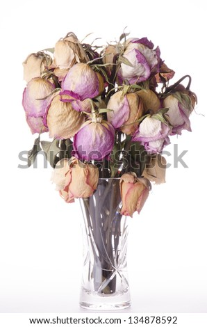 Beautiful dry roses in a vase - stock photo