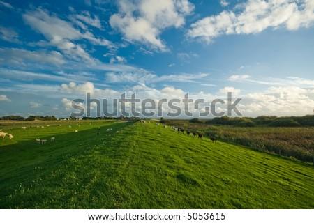 beautiful dutch farmland  landscape - stock photo