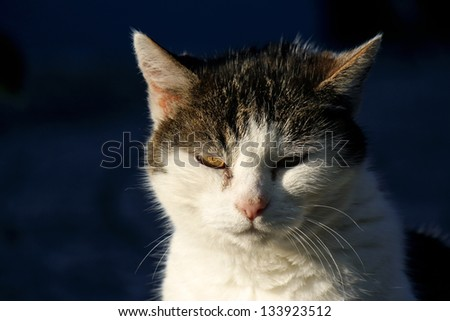 beautiful European cat in front with sunlight on a dark background - stock photo