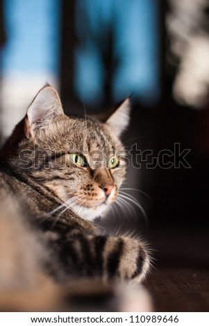 beautiful European cat on a floor - stock photo