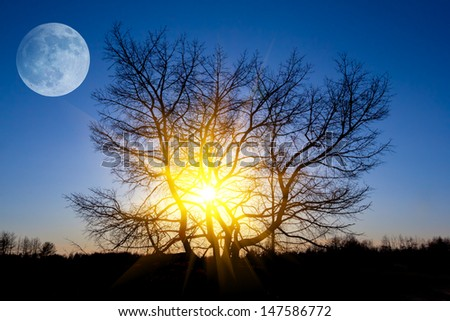 beautiful evening scene moon and tree silhouette