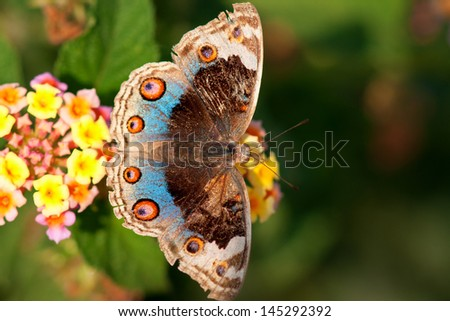 Beautiful exotic butterfly - stock photo