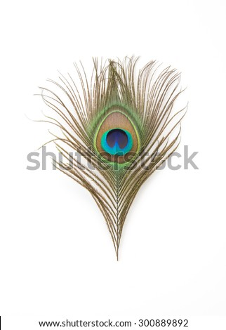 Beautiful exotic peacock feathers on white background - stock photo
