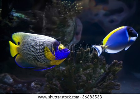 Beautiful exotic tropical fishes under water